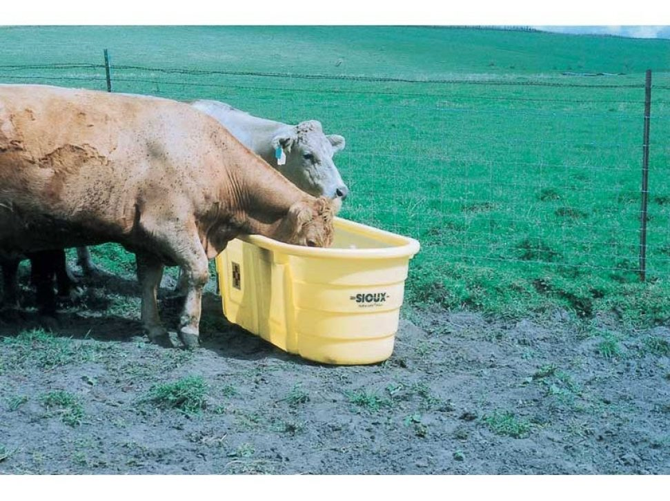 Round End Poly Tank, In Use by two cows